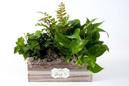 The Plant Scape